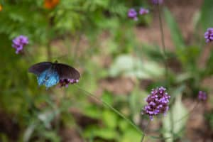 Butterfly and flowers at Ridgecrest Conference Center