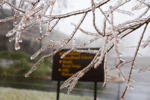 Ice on a tree branch at Ridgecrest Conference Center